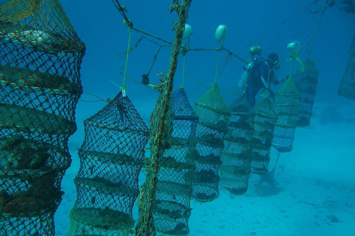 Aνάργυρος - Cleopatra's Sponges - Success story φωτογραφία 1